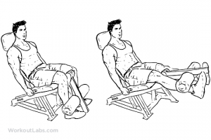 Seated_Machine_Leg_Extensions_M_WorkoutLabs